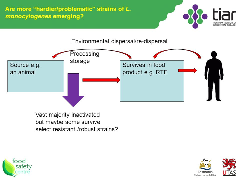 Are more hardier/problematic strains of L. monocytogenes emerging.