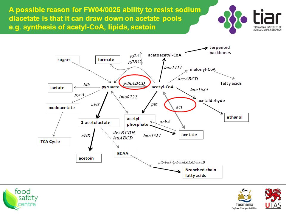 A possible reason for FW04/0025 ability to resist sodium diacetate is that it can draw down on acetate pools e.g.