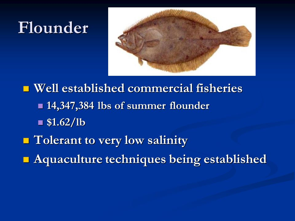 Flounder Well established commercial fisheries Well established commercial fisheries 14,347,384 lbs of summer flounder 14,347,384 lbs of summer flound