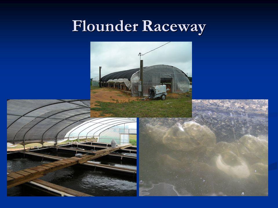 Flounder Raceway