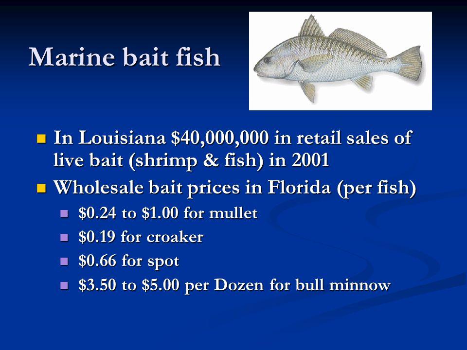 Marine bait fish In Louisiana $40,000,000 in retail sales of live bait (shrimp & fish) in 2001 In Louisiana $40,000,000 in retail sales of live bait (