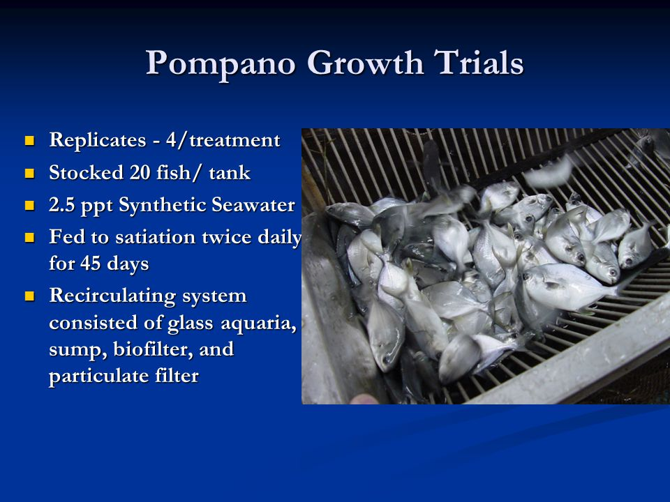 Pompano Growth Trials Replicates - 4/treatment Replicates - 4/treatment Stocked 20 fish/ tank Stocked 20 fish/ tank 2.5 ppt Synthetic Seawater 2.5 ppt