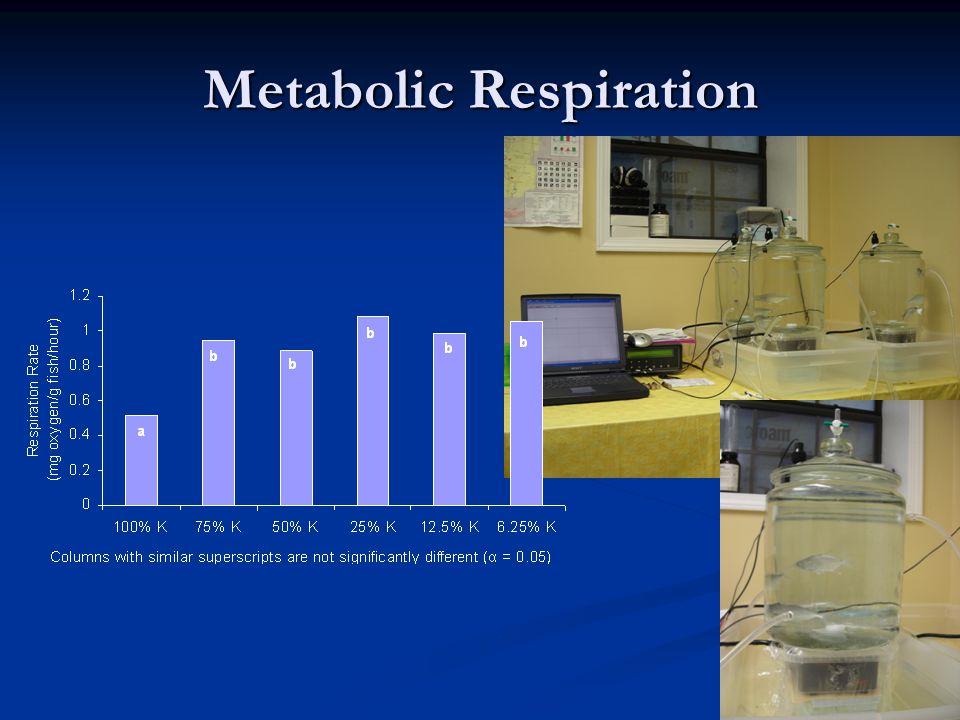 Metabolic Respiration