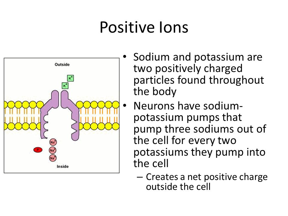 Positive Ions Sodium and potassium are two positively charged particles found throughout the body Neurons have sodium- potassium pumps that pump three
