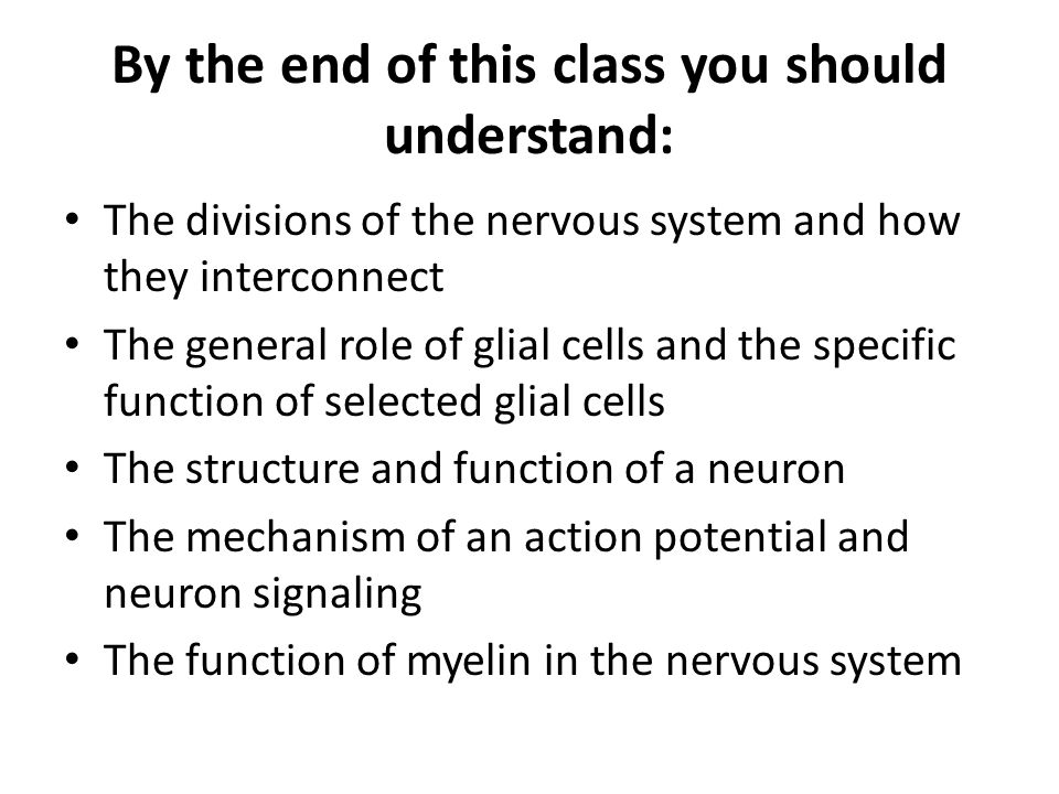 By the end of this class you should understand: The divisions of the nervous system and how they interconnect The general role of glial cells and the