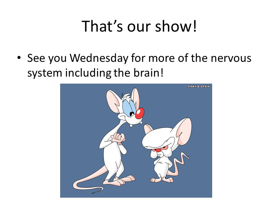 That's our show! See you Wednesday for more of the nervous system including the brain!