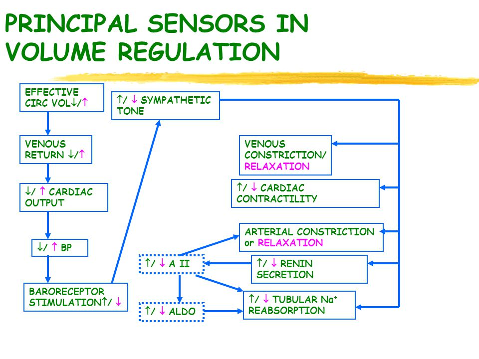 PRINCIPAL SENSORS IN VOLUME REGULATION EFFECTIVE CIRC VOL  /  VENOUS RETURN  /   /  CARDIAC OUTPUT  /  BP BARORECEPTOR STIMULATION  /   /  SYMPATHETIC TONE VENOUS CONSTRICTION/ RELAXATION  /  CARDIAC CONTRACTILITY ARTERIAL CONSTRICTION or RELAXATION  /  RENIN SECRETION  /  TUBULAR Na + REABSORPTION  /  A II  /  ALDO