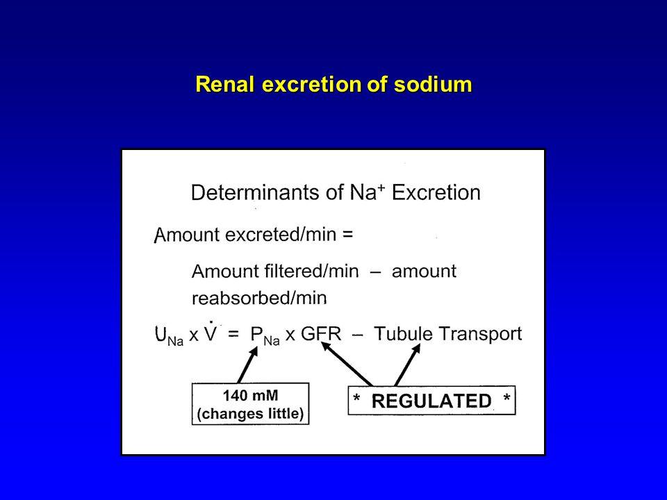 Renal excretion of sodium