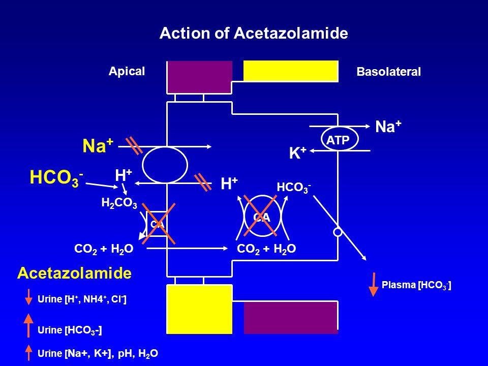 K+K+ ATP Na + Basolateral Apical CA HCO 3 - CO 2 + H 2 O H+H+ Action of Acetazolamide Acetazolamide Urine [H +, NH4 +, Cl - ] Plasma [HCO 3 - ] CA H+H+ HCO 3 - H 2 CO 3 CO 2 + H 2 O Urine [ HCO 3 -] Urine [ Na+, K+], pH, H 2 O