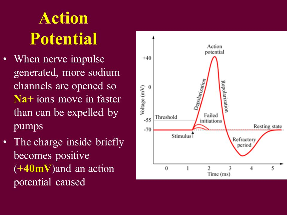 Properties of the action potential Action potentials are all-or-nothing: there either is one, or there isn't; this is therefore a digital signalling system Action potentials are self-propagating: once initiated, an action potential propagates itself along the axon using the ion gradients maintained by the sodium-potassium pump Action potentials do not decay: unlike analogue signalling systems, there is no loss of signal strength with distance travelled