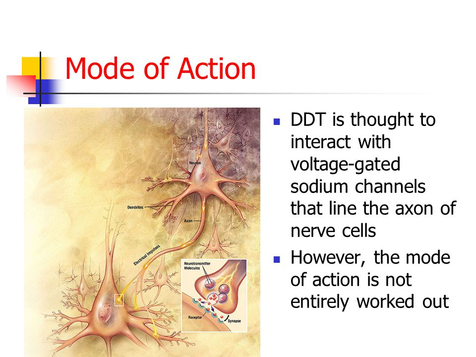 Mode of Action DDT is thought to interact with voltage-gated sodium channels that line the axon of nerve cells However, the mode of action is not entirely worked out