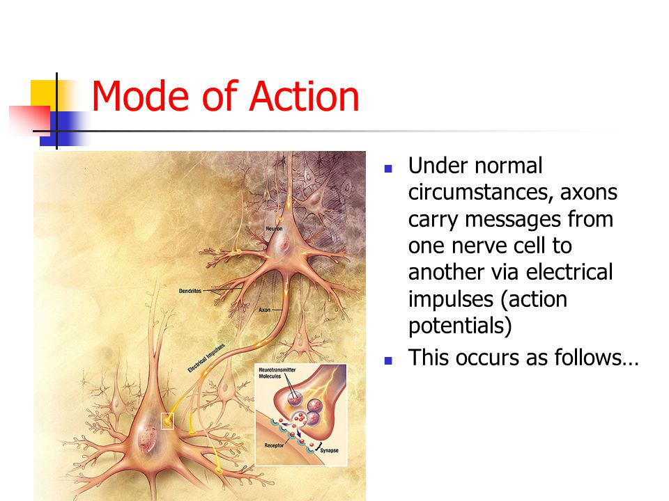 Mode of Action Under normal circumstances, axons carry messages from one nerve cell to another via electrical impulses (action potentials) This occurs as follows…