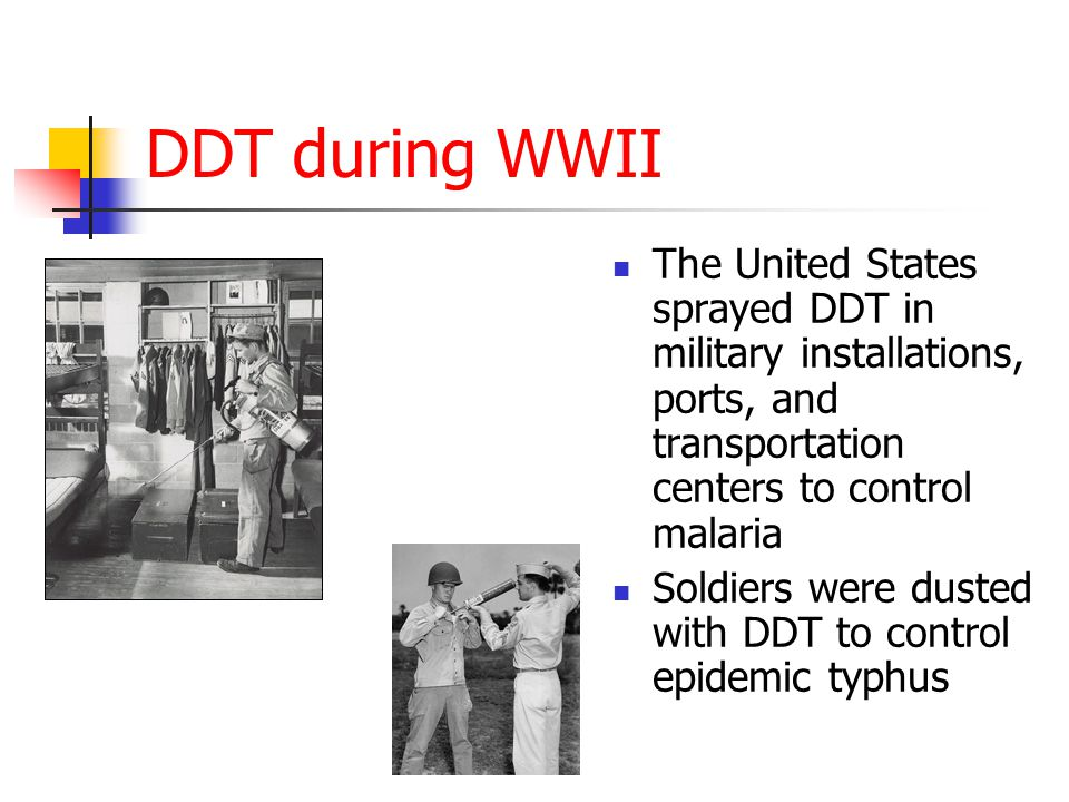 DDT during WWII The United States sprayed DDT in military installations, ports, and transportation centers to control malaria Soldiers were dusted with DDT to control epidemic typhus