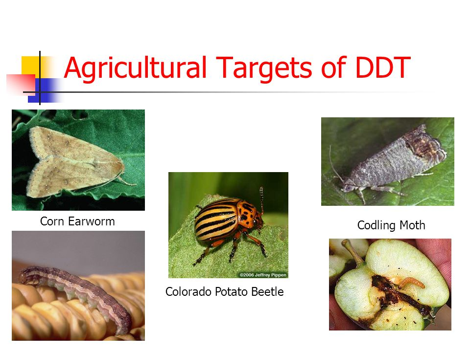 Agricultural Targets of DDT Colorado Potato Beetle Codling Moth Corn Earworm