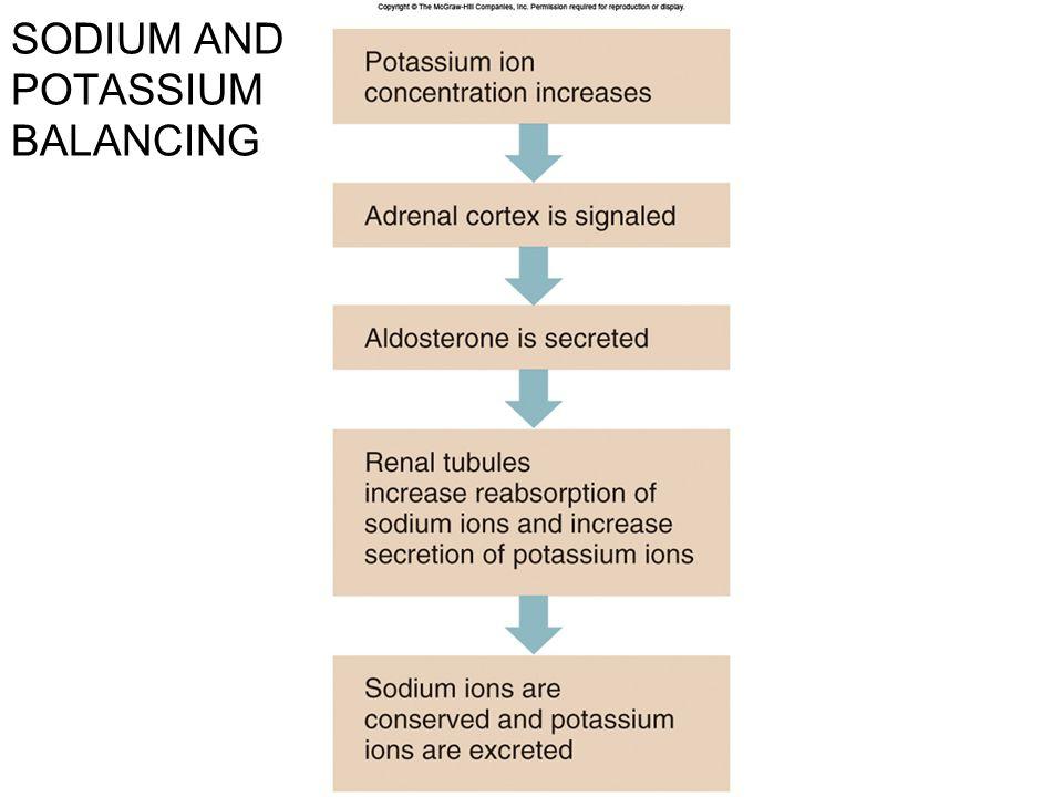 SODIUM AND POTASSIUM BALANCING