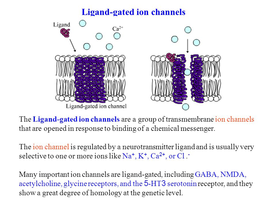 Ligand-gated ion channels The Ligand-gated ion channels are a group of transmembrane ion channels that are opened in response to binding of a chemical messenger.