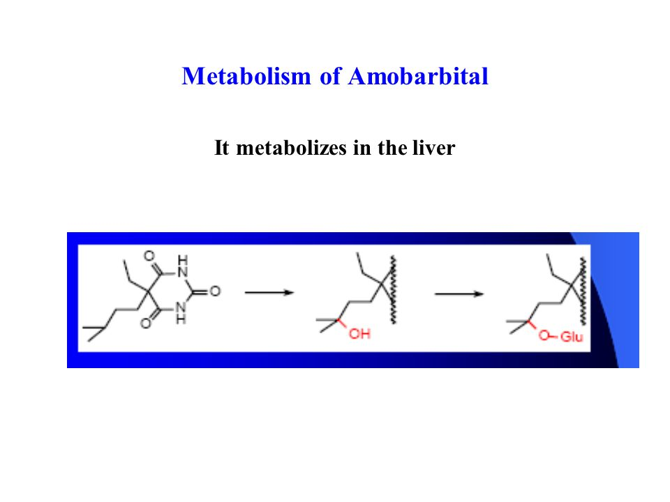 Metabolism of Amobarbital It metabolizes in the liver