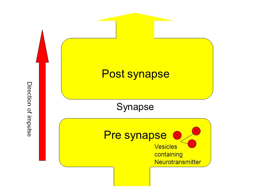 Post synapse Synapse Direction of impulse Pre synapse Vesicles containing Neurotransmitter