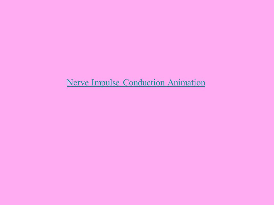 Nerve Impulse Conduction Animation