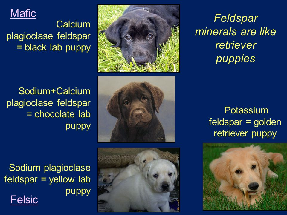 Calcium plagioclase feldspar = black lab puppy Sodium plagioclase feldspar = yellow lab puppy Potassium feldspar = golden retriever puppy Sodium+Calcium plagioclase feldspar = chocolate lab puppy Mafic Felsic Feldspar minerals are like retriever puppies