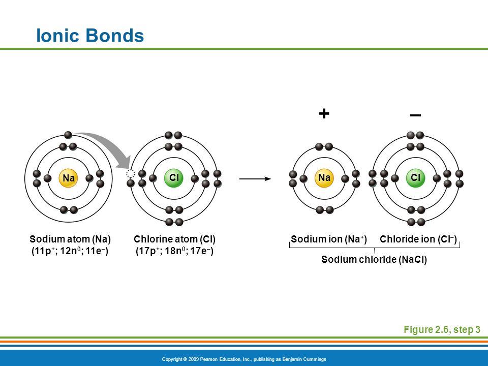 Copyright © 2009 Pearson Education, Inc., publishing as Benjamin Cummings Ionic Bonds Figure 2.6, step 3 +– Sodium atom (Na) (11p + ; 12n 0 ; 11e – ) Chlorine atom (Cl) (17p + ; 18n 0 ; 17e – ) Sodium ion (Na + )Chloride ion (Cl – ) Sodium chloride (NaCl) ClNaCl Na