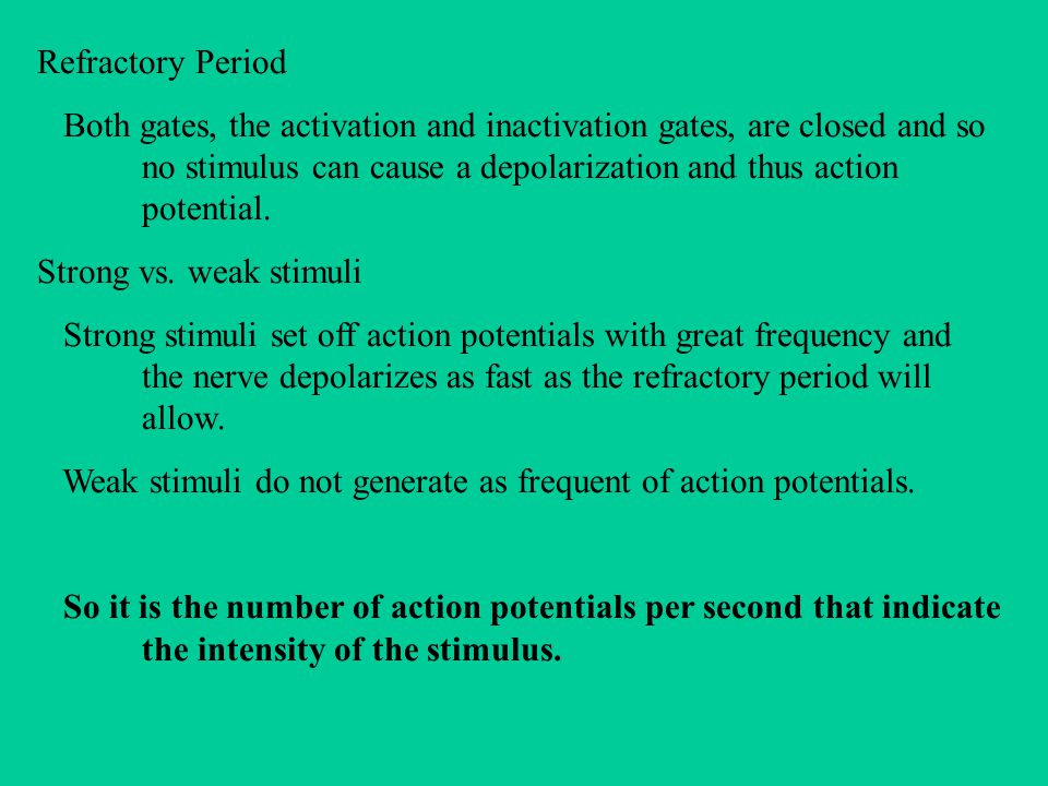 Refractory Period Both gates, the activation and inactivation gates, are closed and so no stimulus can cause a depolarization and thus action potential.