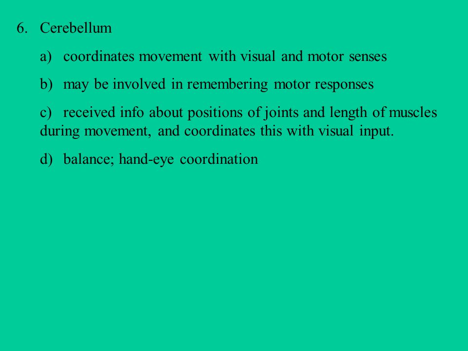 6.Cerebellum a)coordinates movement with visual and motor senses b) may be involved in remembering motor responses c)received info about positions of joints and length of muscles during movement, and coordinates this with visual input.