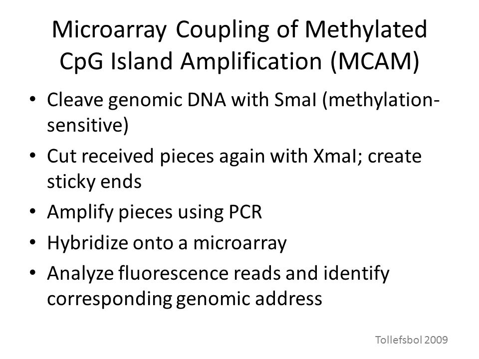 Microarray Coupling of Methylated CpG Island Amplification (MCAM) Cleave genomic DNA with SmaI (methylation- sensitive) Cut received pieces again with XmaI; create sticky ends Amplify pieces using PCR Hybridize onto a microarray Analyze fluorescence reads and identify corresponding genomic address Tollefsbol 2009