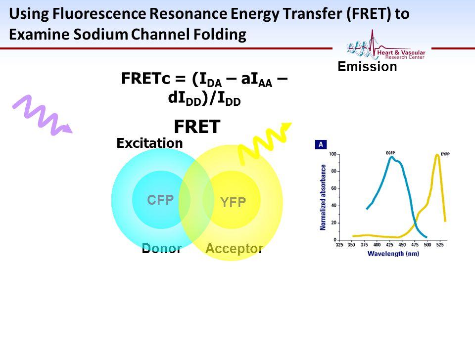 Using Fluorescence Resonance Energy Transfer (FRET) to Examine Sodium Channel Folding CFP Donor YFP Acceptor Excitation FRET Emission FRETc = (I DA –