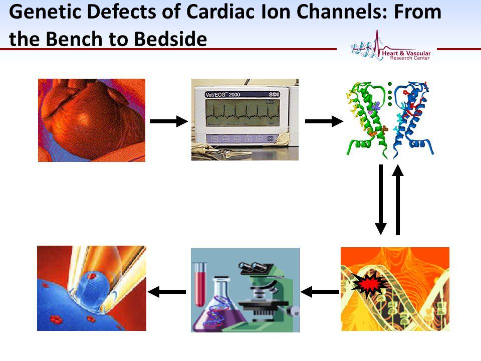 Cardiac Sodium Channelopathies: One Gene, Many Diseases SCN5A (Gene) Nav1.5 (Protein) Sudden Infant Death Syndrome Still Birth Brugada Syndrome Cardiac Conduction Defect Sick Sinus Syndrome Dilated Cardiomyopathy Atrial Fibrillation Gain-of- function Loss-of- function Long QT 3 Syndrome