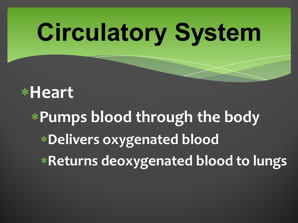  Heart  Pumps blood through the body  Delivers oxygenated blood  Returns deoxygenated blood to lungs Circulatory System