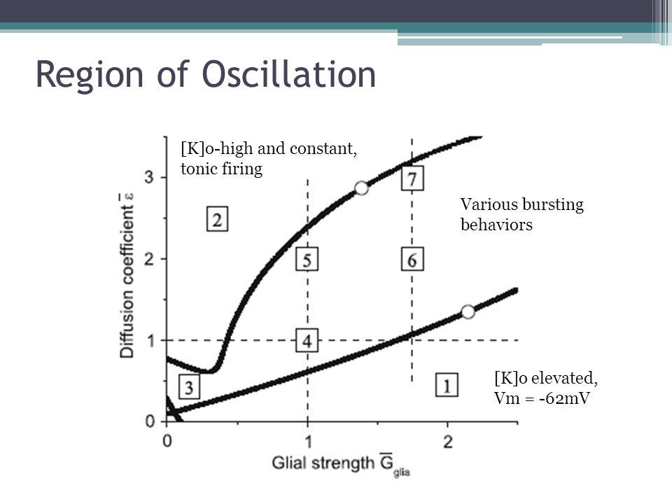 Region of Oscillation [K]o-high and constant, tonic firing Various bursting behaviors [K]o elevated, Vm = -62mV