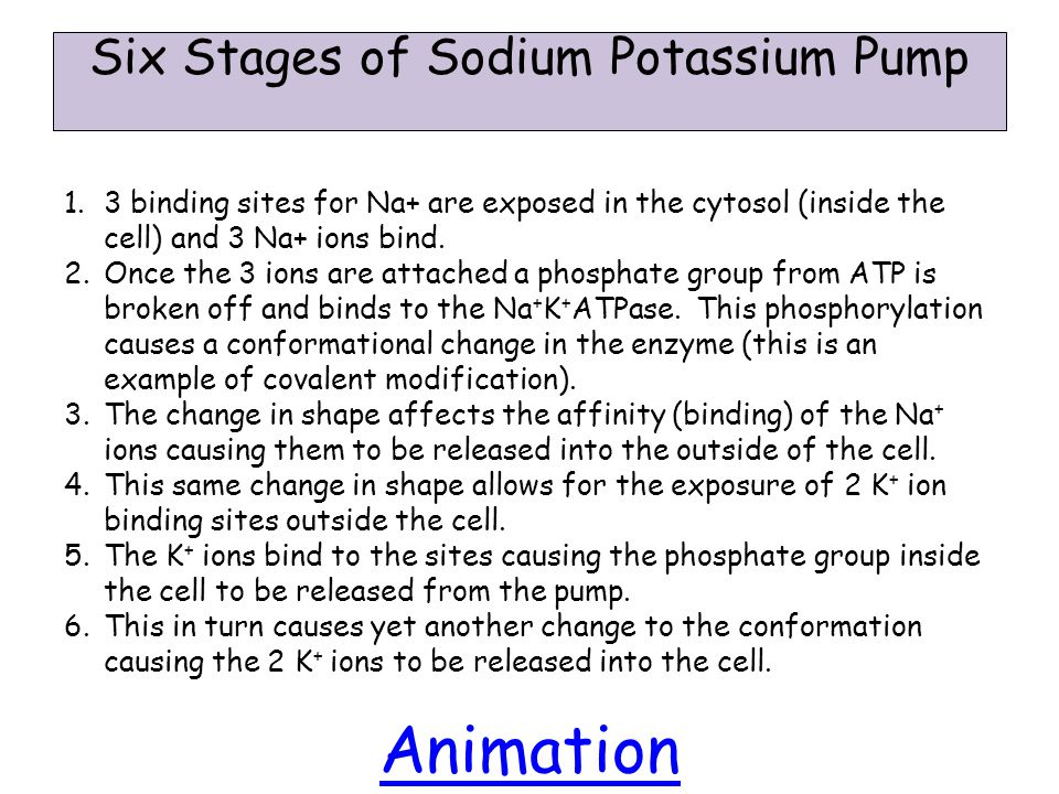 Six Stages of Sodium Potassium Pump 1.3 binding sites for Na+ are exposed in the cytosol (inside the cell) and 3 Na+ ions bind.