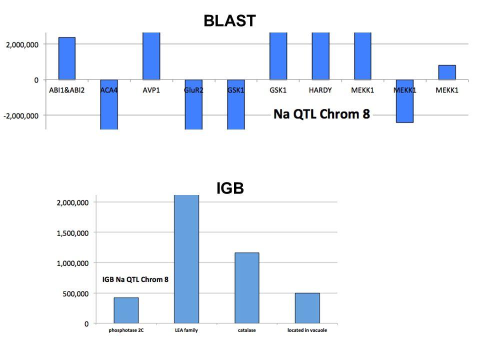 BLAST IGB