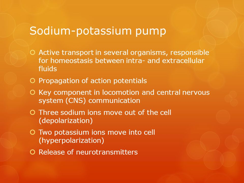 Sodium-potassium pump  Active transport in several organisms, responsible for homeostasis between intra- and extracellular fluids  Propagation of action potentials  Key component in locomotion and central nervous system (CNS) communication  Three sodium ions move out of the cell (depolarization)  Two potassium ions move into cell (hyperpolarization)  Release of neurotransmitters