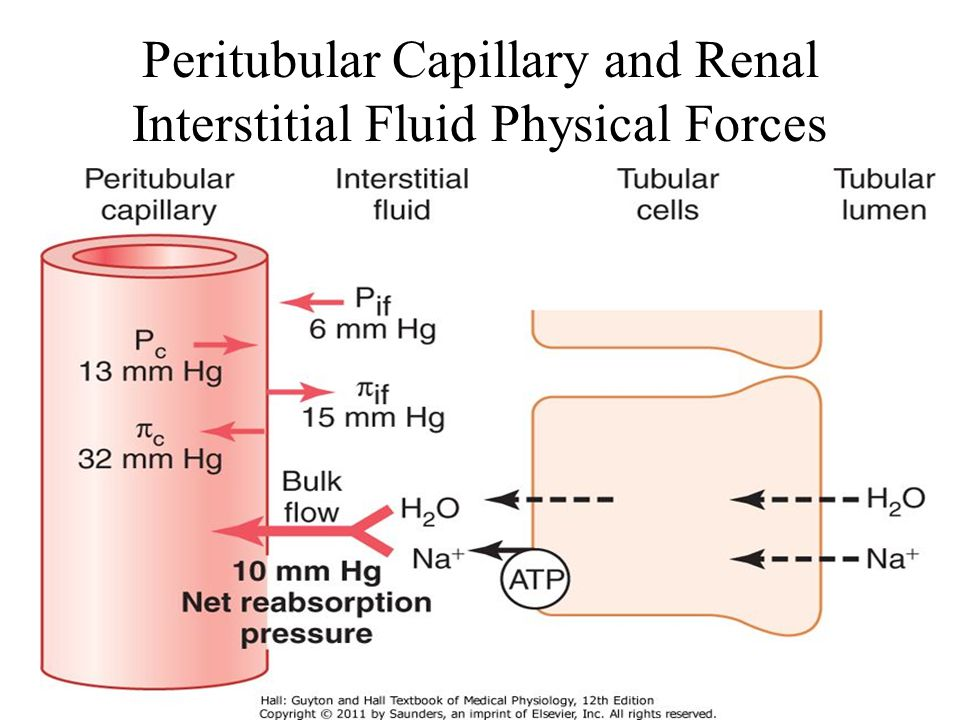 Peritubular Capillary and Renal Interstitial Fluid Physical Forces