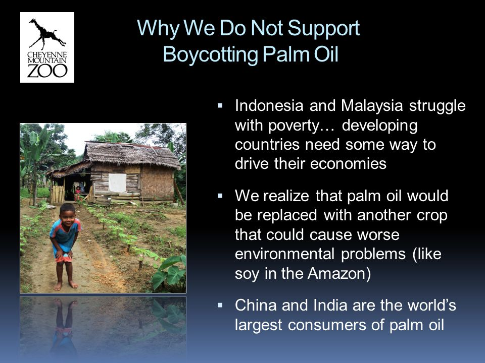 Palm oil plants can produce 4-10 times more oil per parcel of land than other oil crops.