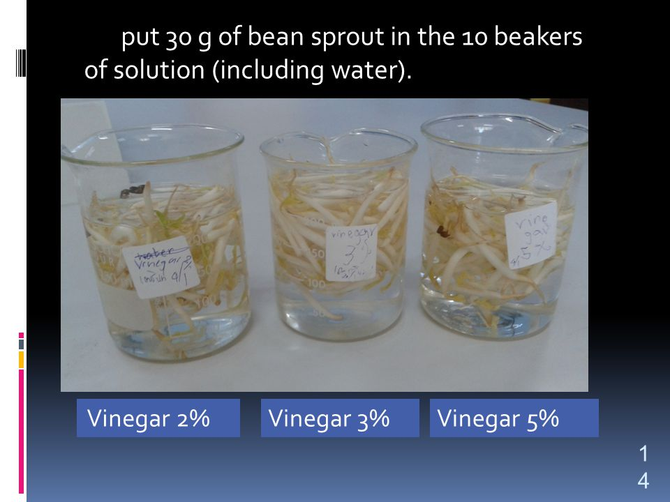 put 30 g of bean sprout in the 10 beakers of solution (including water).