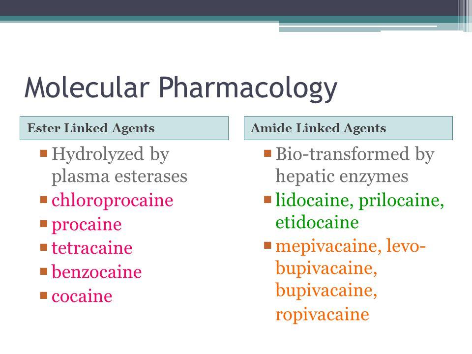 Molecular Pharmacology Ester Linked Agents Amide Linked Agents  Hydrolyzed by plasma esterases  chloroprocaine  procaine  tetracaine  benzocaine