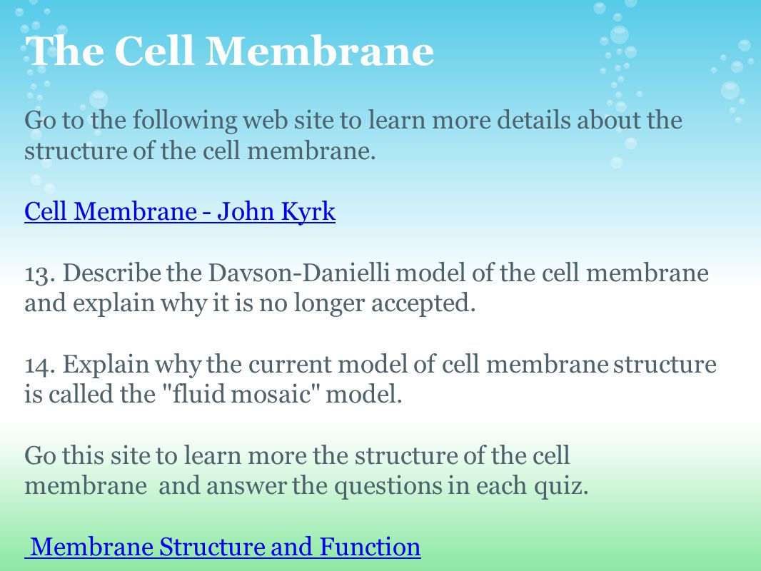 The Cell Membrane Go to the following web site to learn more details about the structure of the cell membrane. Cell Membrane - John Kyrk 13. Describe