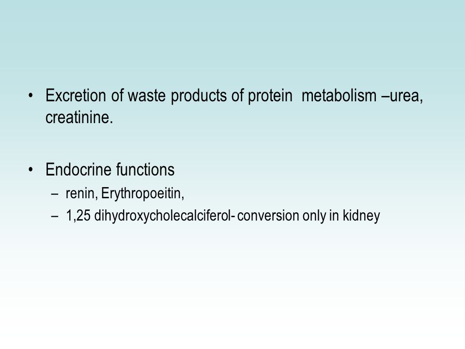 Cystatin C Under Investigation Early detection of renal dysfunction – 2nd day Cysteine protease inhibitor Released into circulation by nucleated cells Completely filtered at glomerulus (not secreted) –Related to GFR & S.