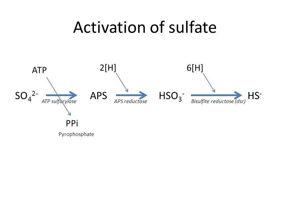 Activation of sulfate SO 4 2- APSHSO 3 - HS - ATP sulfurylaseAPS reductaseBisulfite reductase (dsr) ATP PPi Pyrophosphate 2[H] 6[H]