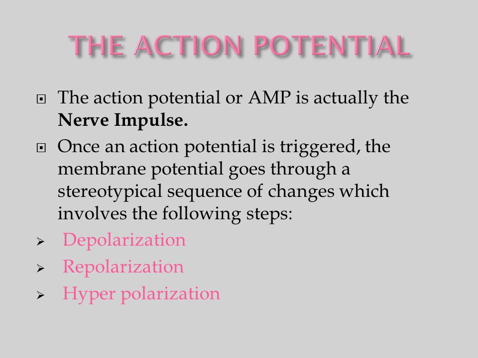  The action potential or AMP is actually the Nerve Impulse.  Once an action potential is triggered, the membrane potential goes through a stereotypi