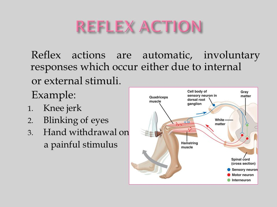 Reflex actions are automatic, involuntary responses which occur either due to internal or external stimuli. Example: 1. Knee jerk 2. Blinking of eyes