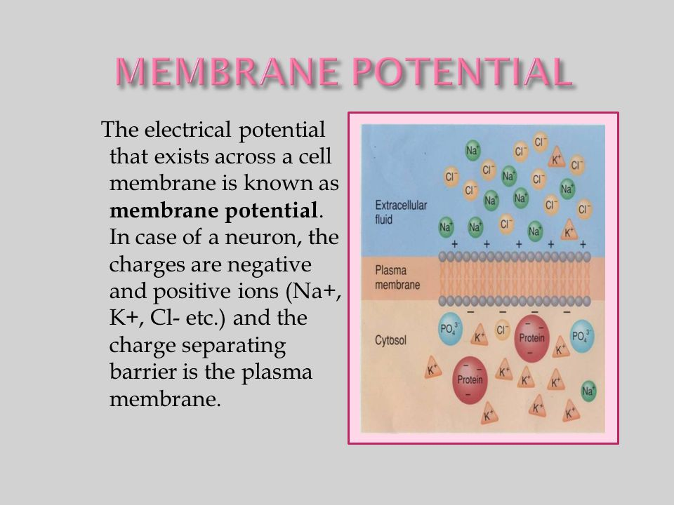 The electrical potential that exists across a cell membrane is known as membrane potential. In case of a neuron, the charges are negative and positive