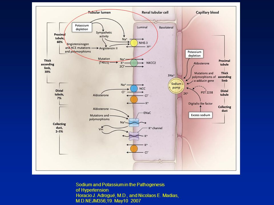 Sodium and Potassium in the Pathogenesis of Hypertension Horacio J.