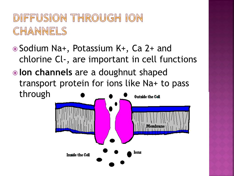  Sodium Na+, Potassium K+, Ca 2+ and chlorine Cl-, are important in cell functions  Ion channels are a doughnut shaped transport protein for ions li