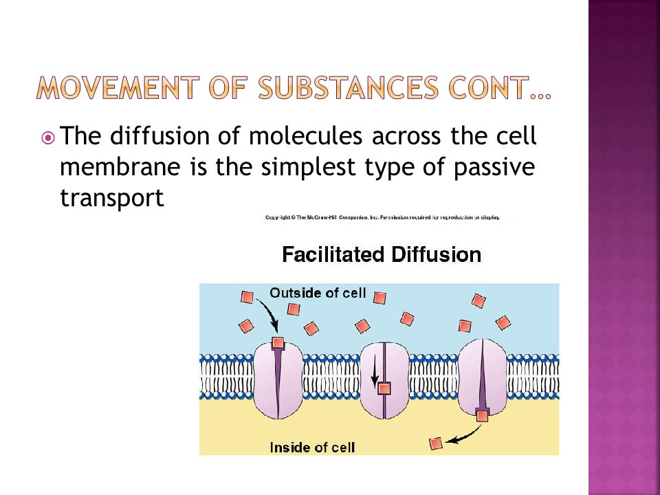  The diffusion of molecules across the cell membrane is the simplest type of passive transport