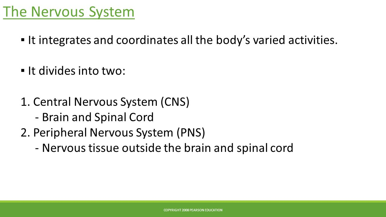 The Nervous System ▪ It integrates and coordinates all the body's varied activities. ▪ It divides into two: 1. Central Nervous System (CNS) - Brain an