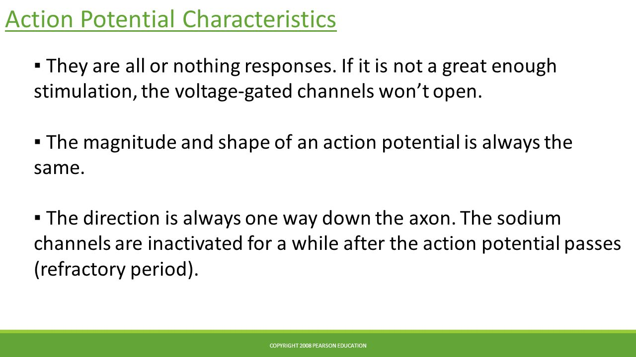 Action Potential Characteristics COPYRIGHT 2008 PEARSON EDUCATION ▪ They are all or nothing responses. If it is not a great enough stimulation, the vo